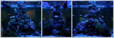 Akwarium morskie (680l)