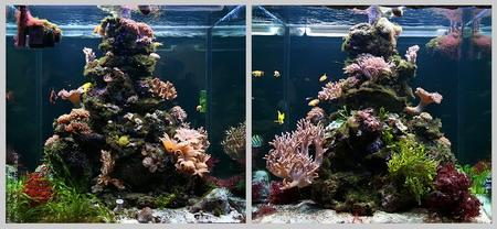 Akwarium morskie (680l) po włączeniu światła