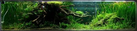 Największe akwarium (750l)