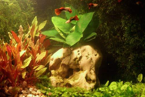 Zaaran¿owane w kuchni akwarium