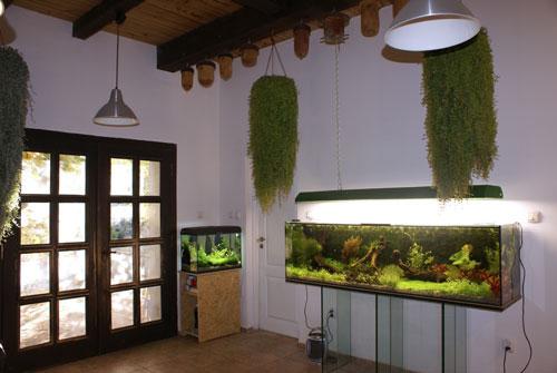 W akwarium 180x45x50 (zwraca uwagê szklany stolik pod nim) Marian pomie¶ci³ kompozycjê ro¶lin i  korzeni,  za któr± 15 wrze¶nia 2007 r. w Warszawie dosta³ I miejsce za naj³adniejsze akwarium.