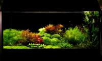 112l - Растения на Земле - świerzak