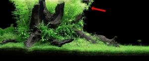 greenr-4