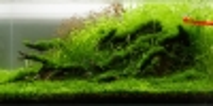 greenr-5