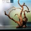 Como escolher as raízes do aquário