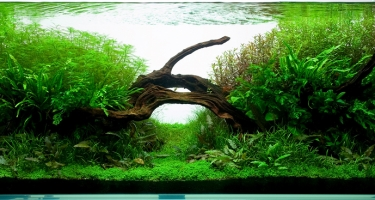 243l - Nature Aquarium I - Radek Baszak