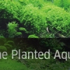 The Art of the Planted Aquarium 2013