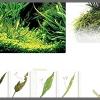 Ключ к определению недостатков в растениях