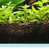 Wie Algen obrastające Silikon in den Ecken des Aquariums zu reinigen