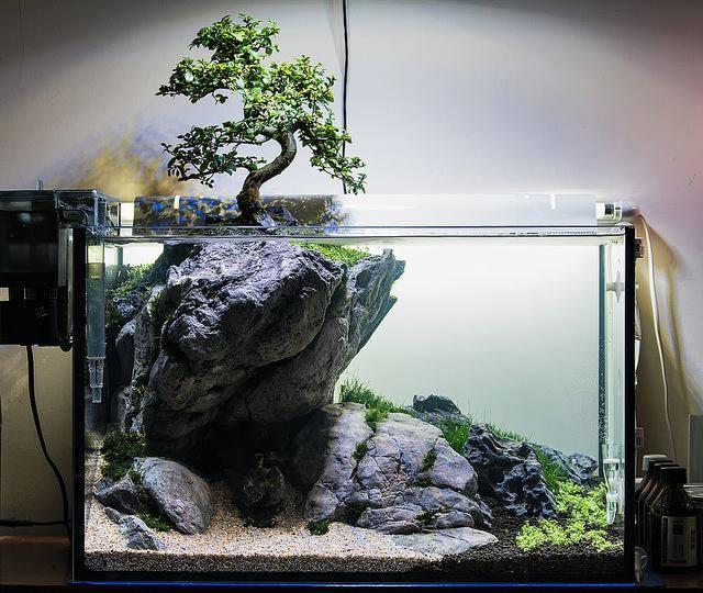 Drzewko Bonsai W Akwarium