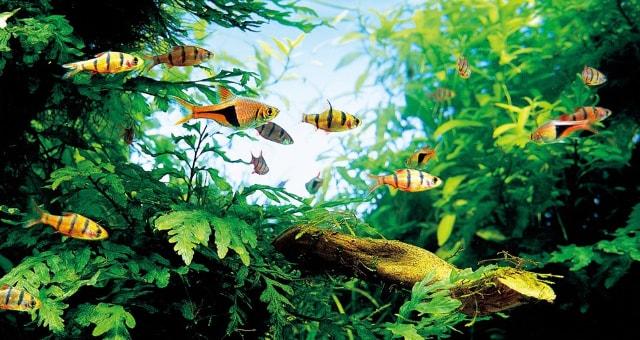 aquários planta